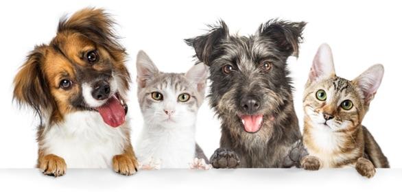 Servicio de cuidado de mascotas